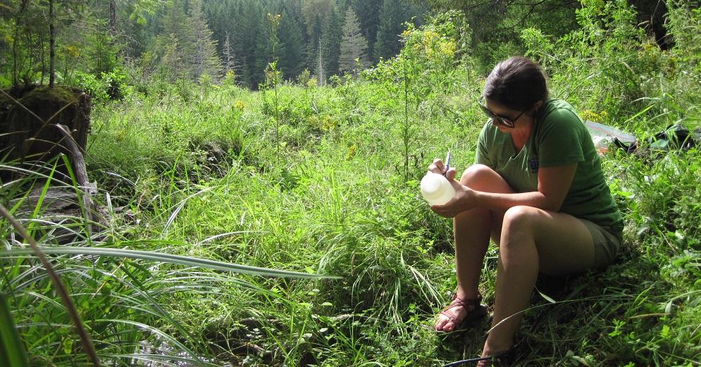 Watershed Sampling